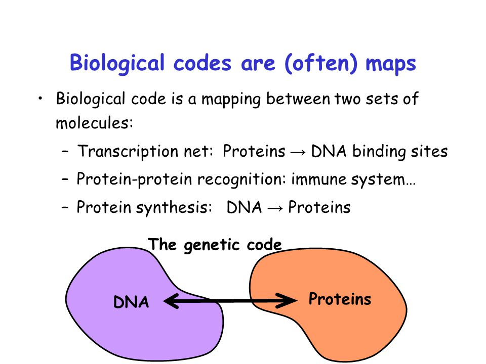 Biological codes are (often) maps Biological code is a mapping between two sets of molecules: –Transcription net: Proteins → DNA binding sites –Protei
