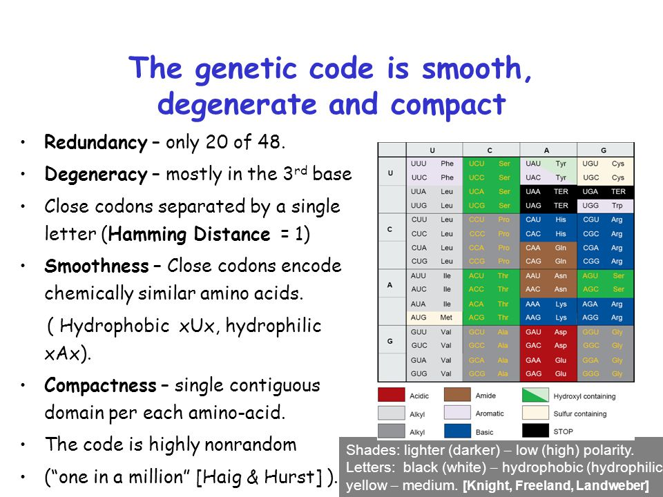 The genetic code is smooth, degenerate and compact Redundancy – only 20 of 48. Degeneracy – mostly in the 3 rd base Close codons separated by a single