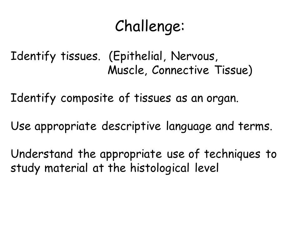 Challenge: Identify tissues.