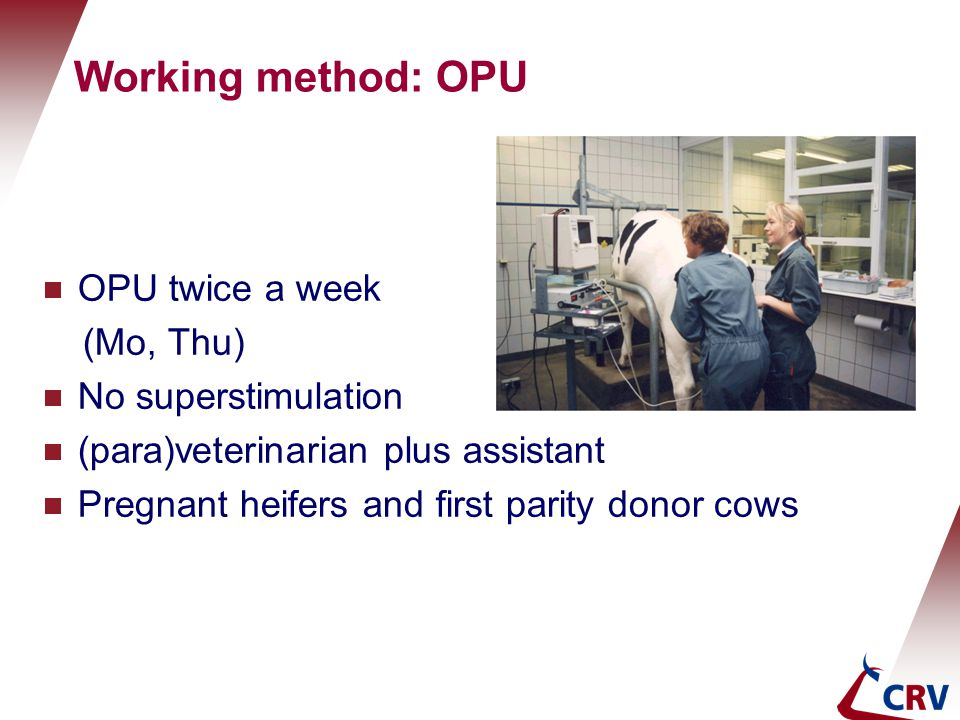 Working method: OPU  OPU twice a week (Mo, Thu)  No superstimulation  (para)veterinarian plus assistant  Pregnant heifers and first parity donor c