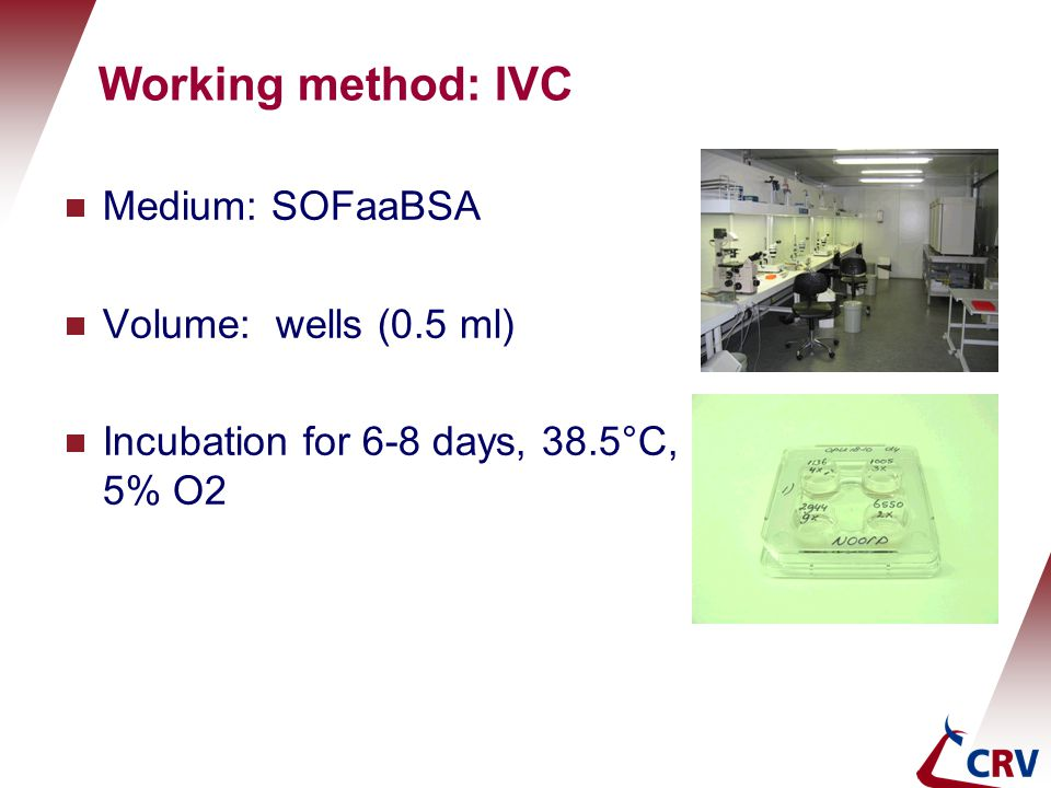 Working method: IVC  Medium: SOFaaBSA  Volume: wells (0.5 ml)  Incubation for 6-8 days, 38.5°C, 5% O2 Holland Genetics