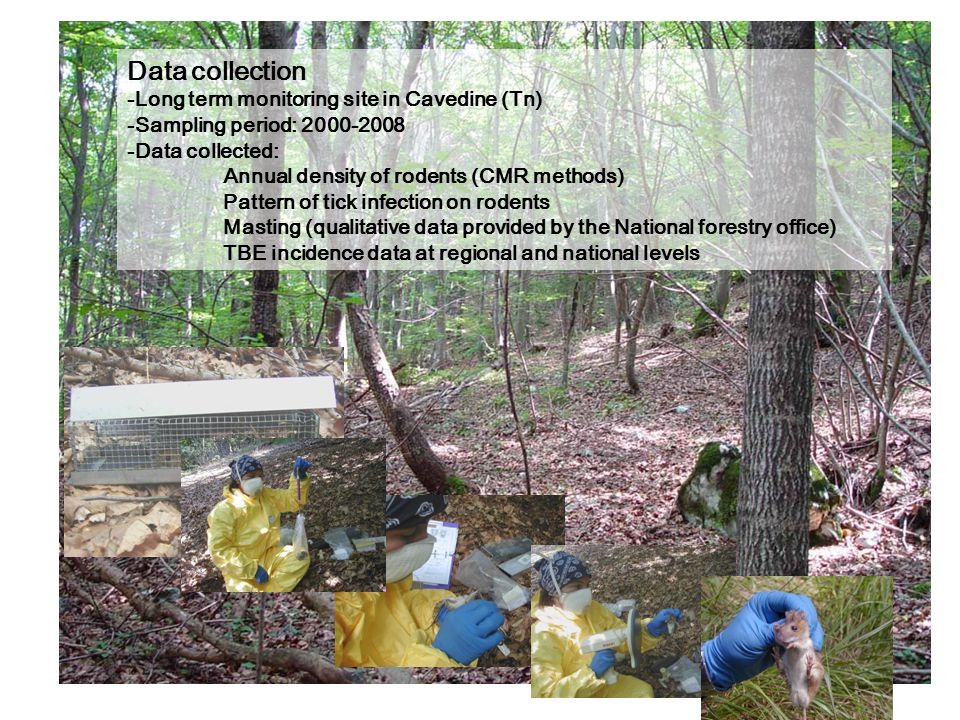 Data collection -Long term monitoring site in Cavedine (Tn) -Sampling period: 2000-2008 -Data collected: Annual density of rodents (CMR methods) Patte