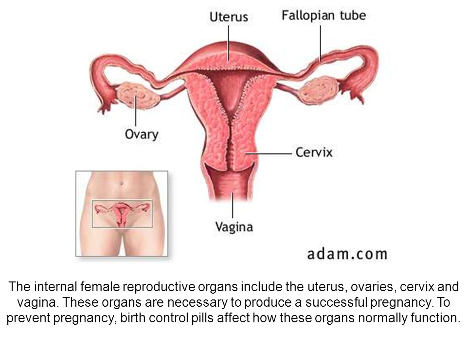 2114 7 The internal female reproductive organs include the uterus, ovaries, cervix and vagina.