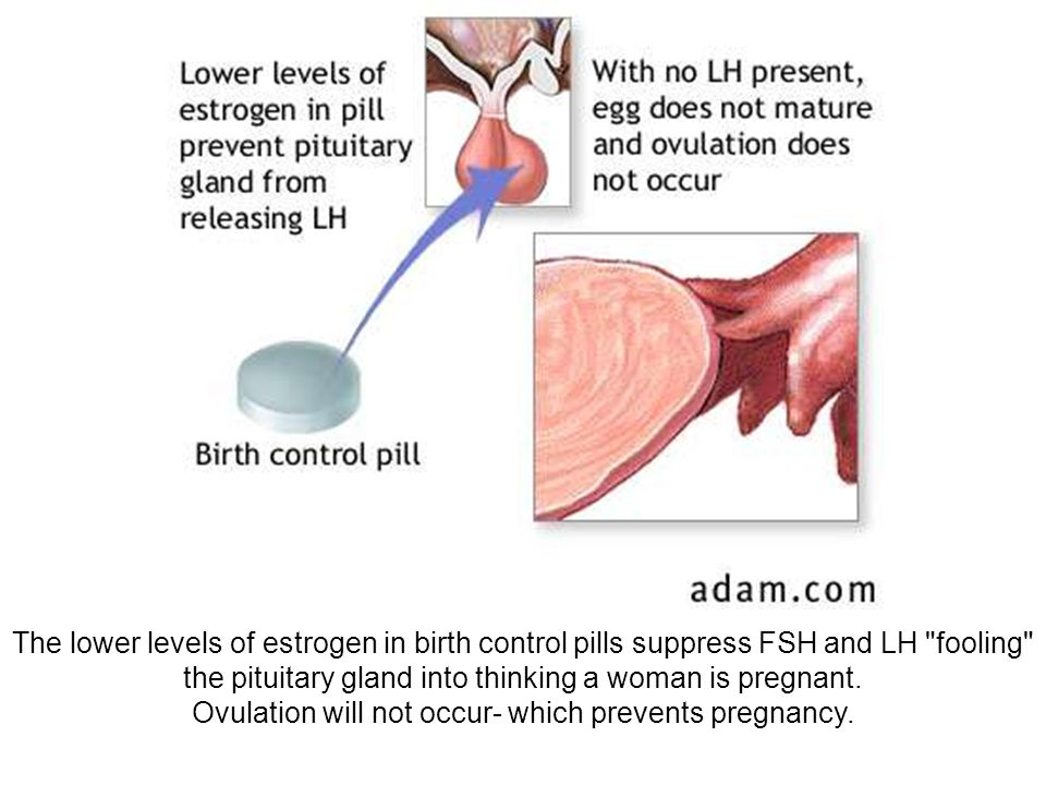 The lower levels of estrogen in birth control pills suppress FSH and LH