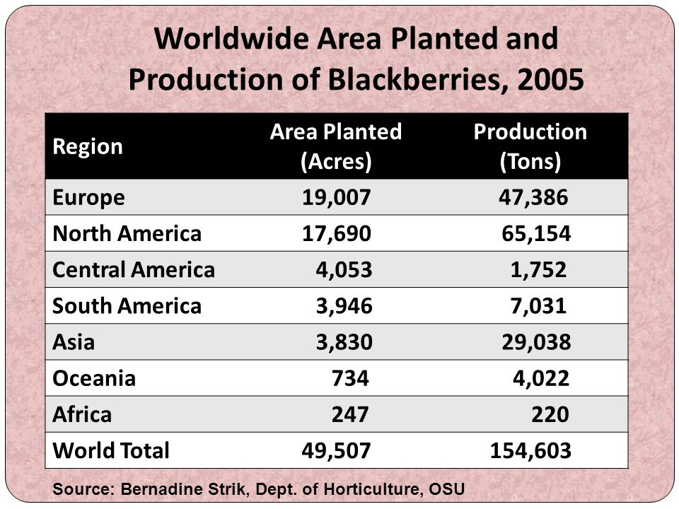 Worldwide Area Planted and Production of Blackberries, 2005 Region Area Planted (Acres) Production (Tons) Europe19,007 47,386 North America17,690 65,1