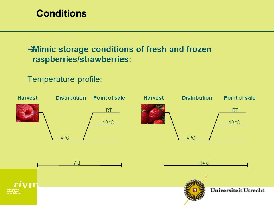 National Institute for Public Health and the Environment Conditions  Mimic storage conditions of fresh and frozen raspberries/strawberries: Temperature profile: HarvestDistributionPoint of sale 10 °C RT 4 °C 7 d Point of saleHarvestDistribution 10 °C RT 4 °C 14 d