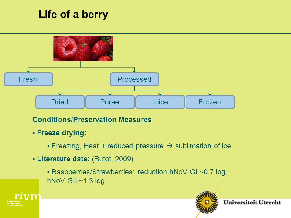 National Institute for Public Health and the Environment Life of a berry ProcessedFresh DriedPureeJuiceFrozen Conditions/Preservation Measures Freeze drying: Freezing, Heat + reduced pressure  sublimation of ice Literature data: (Butot, 2009) Raspberries/Strawberries: reduction hNoV GI ~0.7 log, hNoV GII ~1.3 log