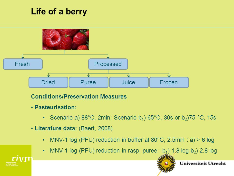 National Institute for Public Health and the Environment Life of a berry ProcessedFresh DriedPureeJuiceFrozen Conditions/Preservation Measures Pasteurisation: Scenario a) 88°C, 2min; Scenario b 1 ) 65°C, 30s or b 2 )75 °C, 15s Literature data: (Baert, 2008) MNV-1 log (PFU) reduction in buffer at 80°C, 2.5min : a) > 6 log MNV-1 log (PFU) reduction in rasp.