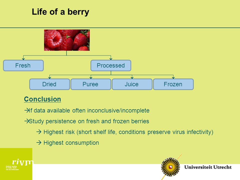National Institute for Public Health and the Environment Life of a berry ProcessedFresh DriedPureeJuiceFrozen Conclusion  If data available often inconclusive/incomplete  Study persistence on fresh and frozen berries  Highest risk (short shelf life, conditions preserve virus infectivity)  Highest consumption