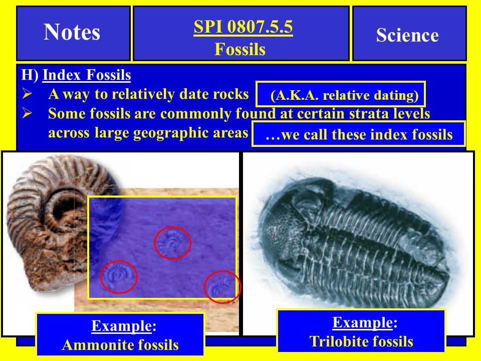 H) Index Fossils  A way to relatively date rocks  Some fossils are commonly found at certain strata levels across large geographic areas (A.K.A. rel