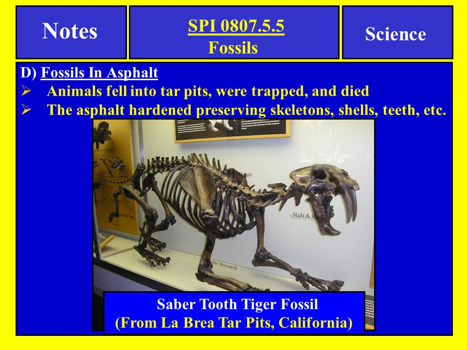 D) Fossils In Asphalt  Animals fell into tar pits, were trapped, and died  The asphalt hardened preserving skeletons, shells, teeth, etc.