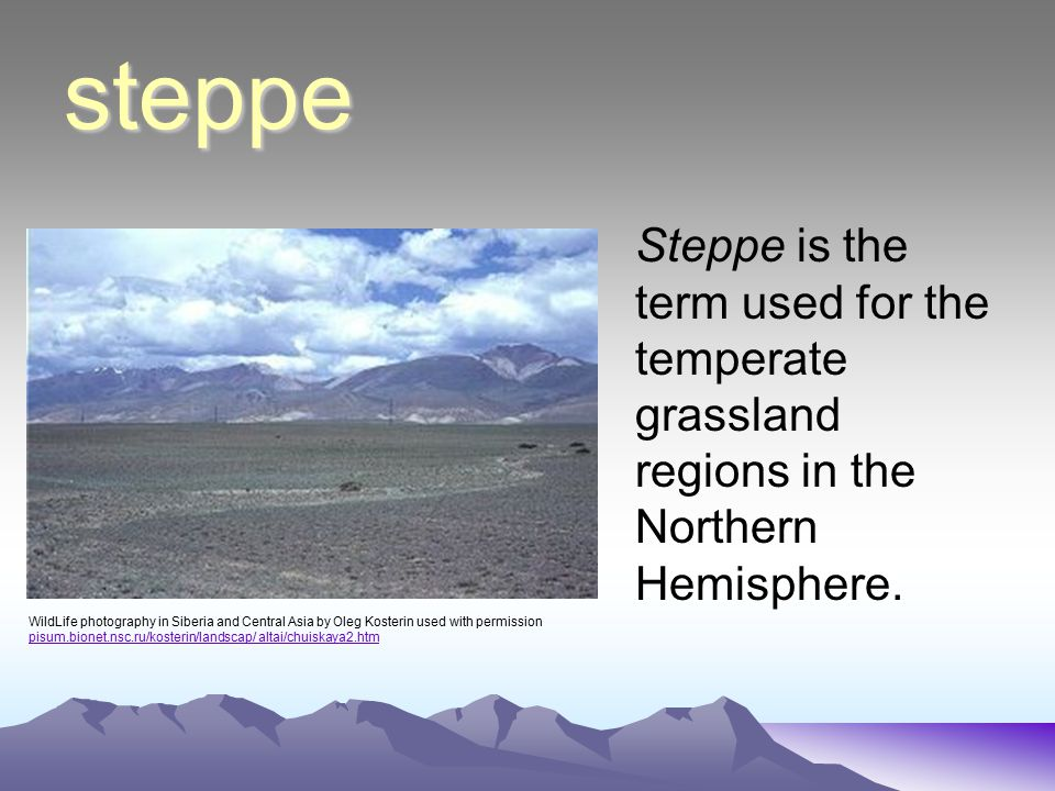 steppe Steppe is the term used for the temperate grassland regions in the Northern Hemisphere.