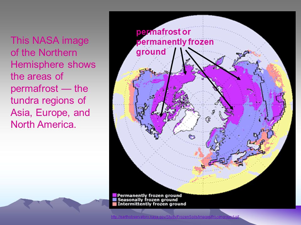 http://earthobservatory.nasa.gov/Study/FrozenSoils/Images/frozenground.gif This NASA image of the Northern Hemisphere shows the areas of permafrost — the tundra regions of Asia, Europe, and North America.