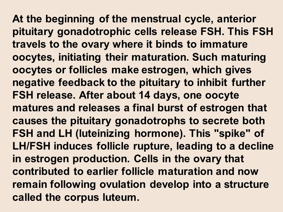 At the beginning of the menstrual cycle, anterior pituitary gonadotrophic cells release FSH. This FSH travels to the ovary where it binds to immature