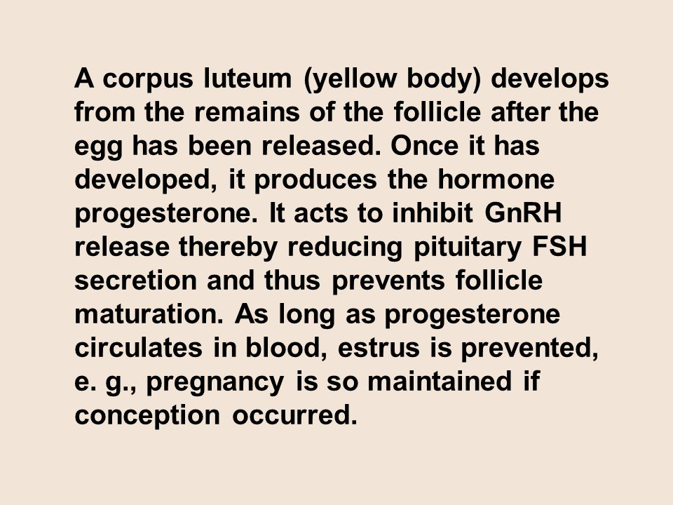 A corpus luteum (yellow body) develops from the remains of the follicle after the egg has been released. Once it has developed, it produces the hormon