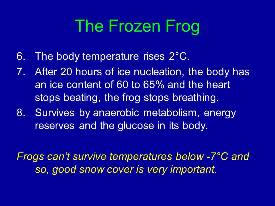 The Frozen Frog 6.The body temperature rises 2°C. 7.