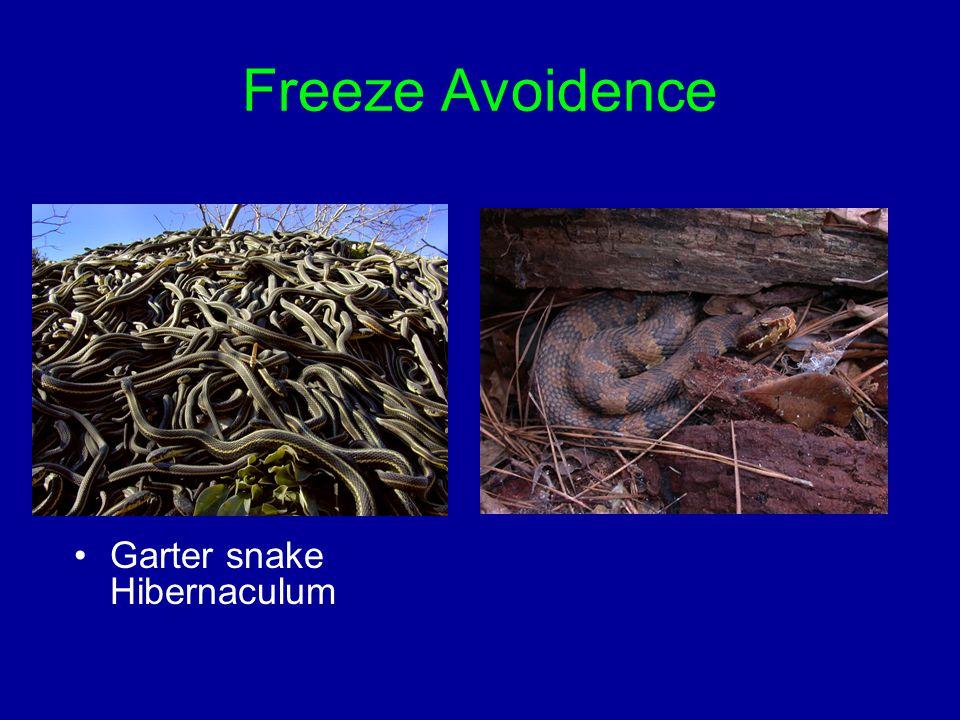 Freeze Avoidence Garter snake Hibernaculum