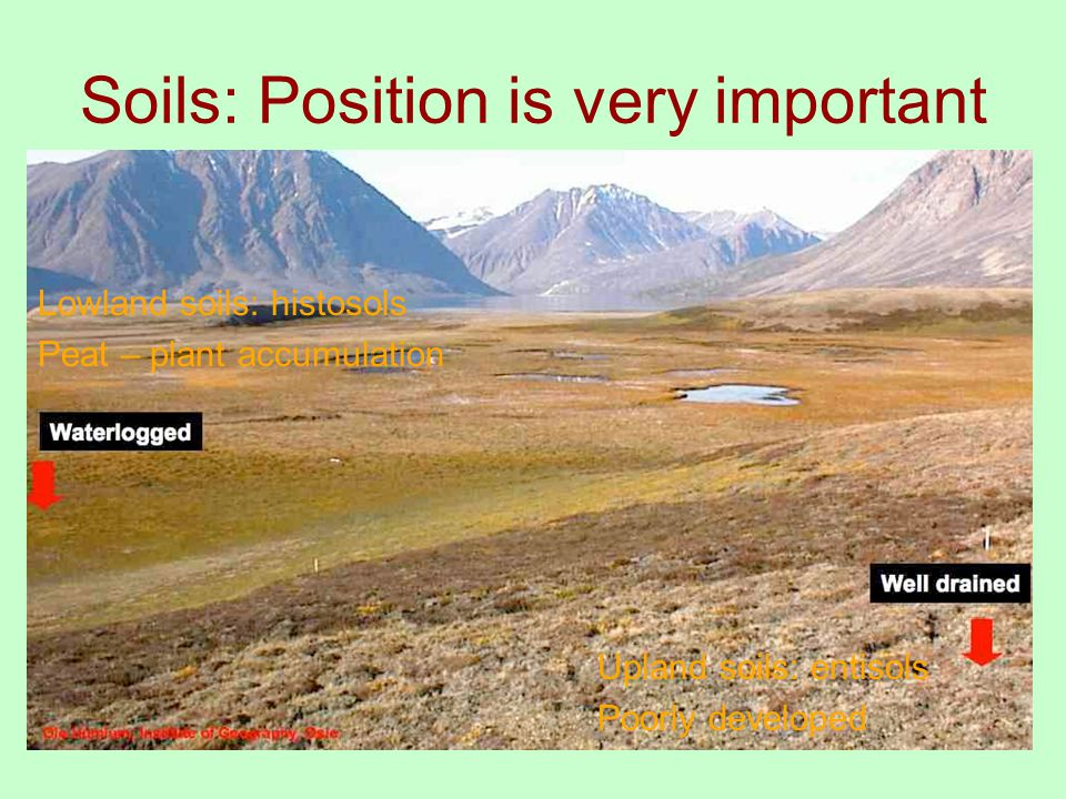 Soils: Position is very important Upland soils: entisols Poorly developed Lowland soils: histosols Peat – plant accumulation