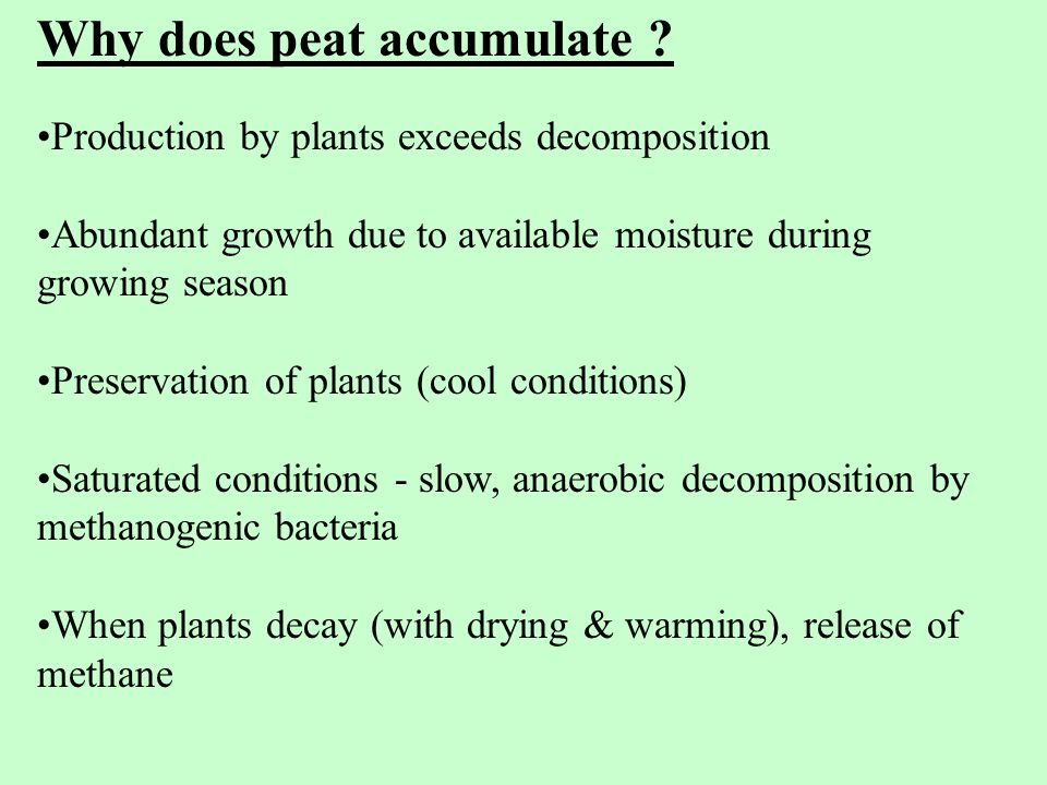 Why does peat accumulate .