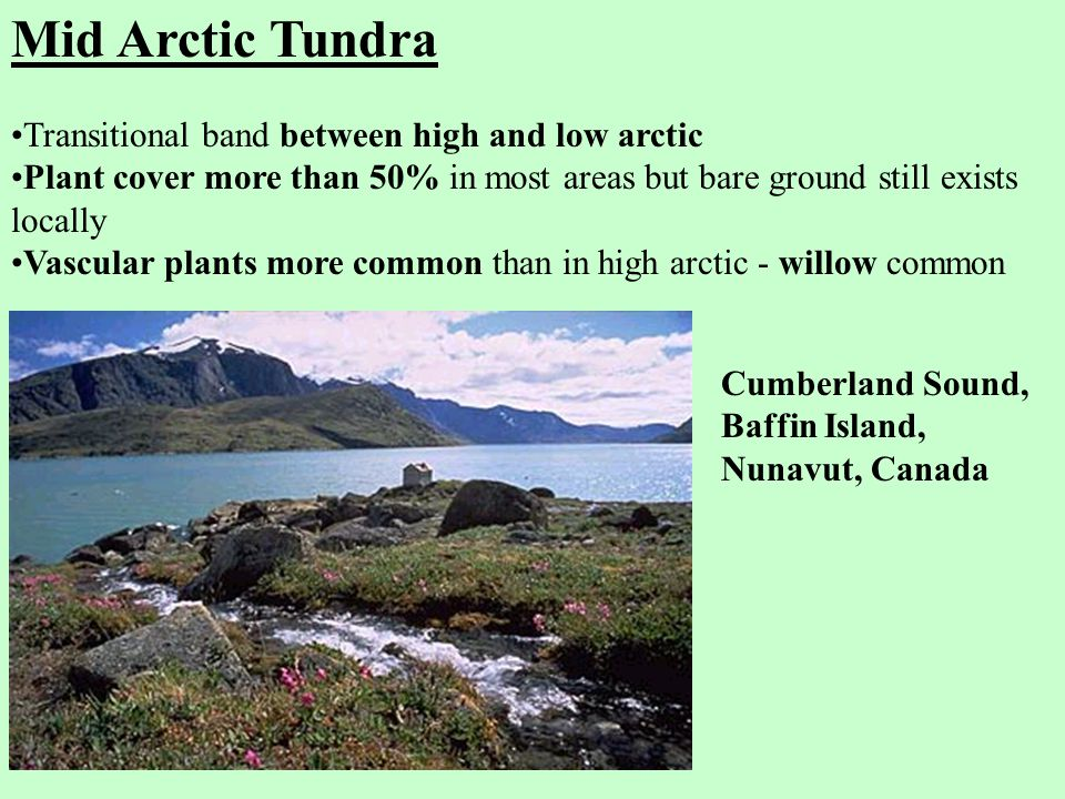 Mid Arctic Tundra Transitional band between high and low arctic Plant cover more than 50% in most areas but bare ground still exists locally Vascular plants more common than in high arctic - willow common Cumberland Sound, Baffin Island, Nunavut, Canada