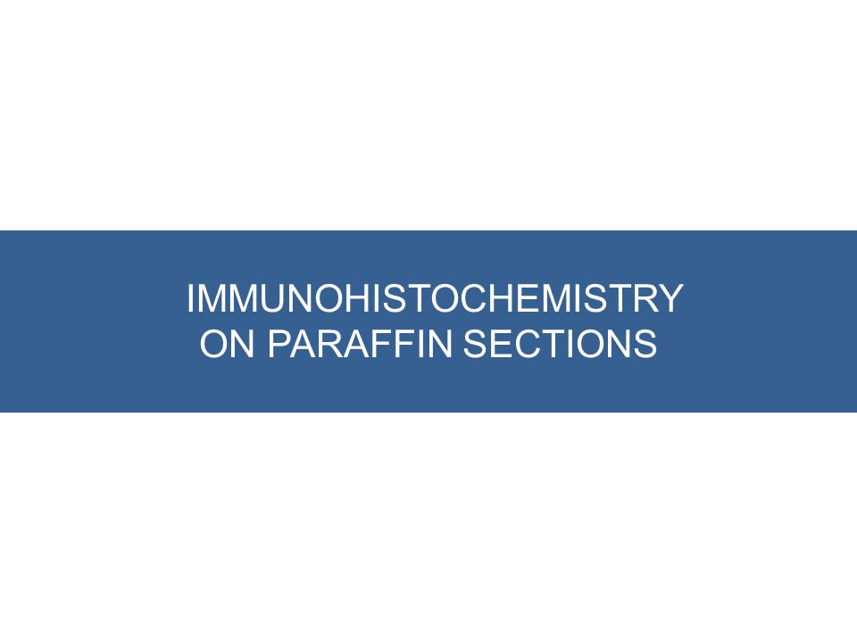 IMMUNOHISTOCHEMISTRY ON PARAFFIN SECTIONS