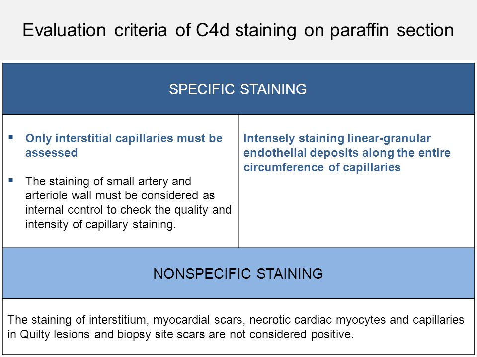 SPECIFIC STAINING  Only interstitial capillaries must be assessed  The staining of small artery and arteriole wall must be considered as internal co