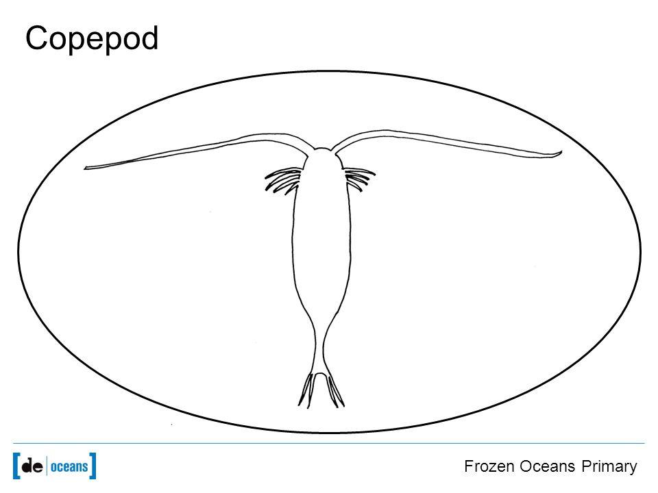 Frozen Oceans Primary Copepod
