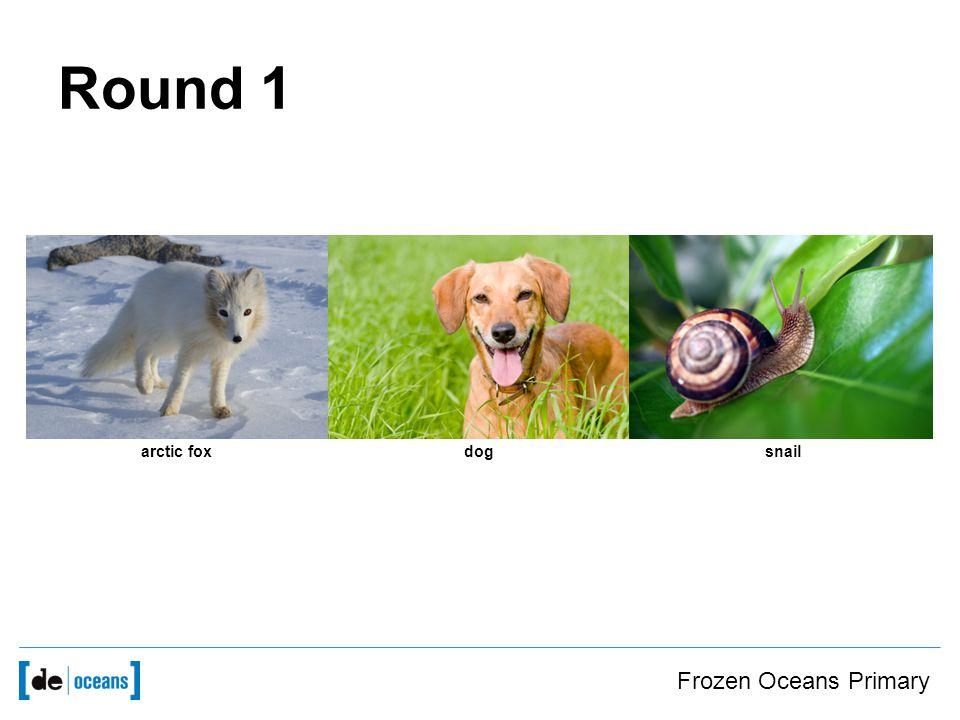 arctic foxdogsnail Round 1