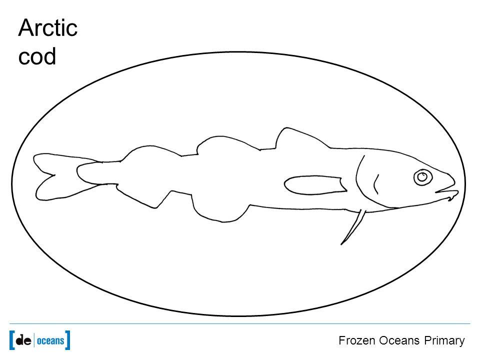 Frozen Oceans Primary Arctic cod