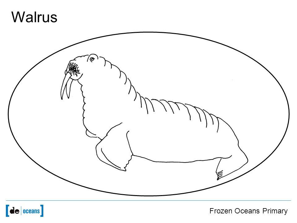 Frozen Oceans Primary Walrus