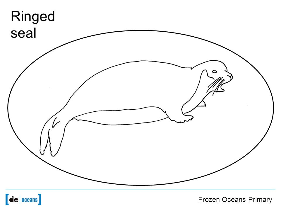 Frozen Oceans Primary Ringed seal