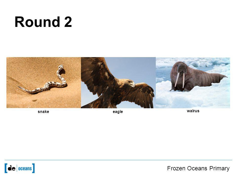 Frozen Oceans Primary Round 2 snakeeagle walrus