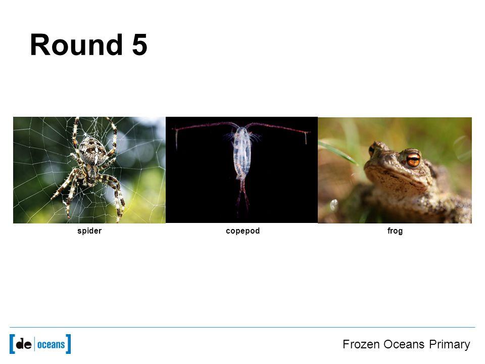 Frozen Oceans Primary Round 5 frogcopepodspider