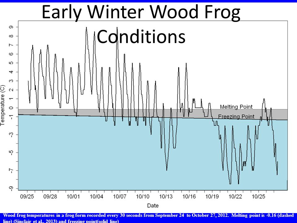 Wood frog temperatures in a frog form recorded every 30 seconds from September 24 to October 27, 2012. Melting point is -0.16 (dashed line) (Sinclair