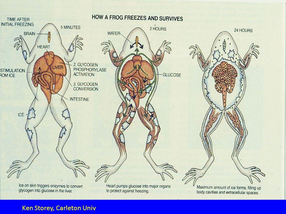 Freeze-thaw protocol.
