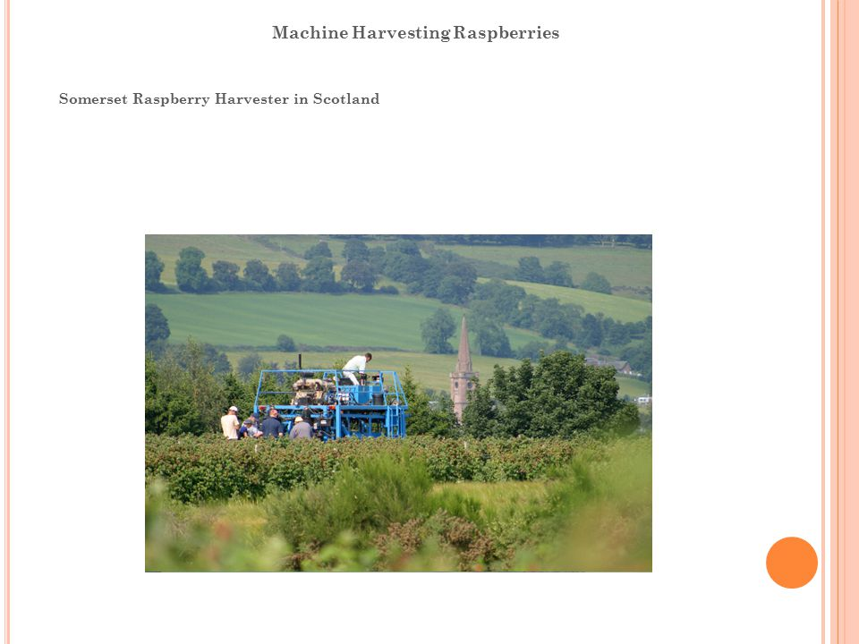 Machine Harvesting Raspberries Somerset Raspberry Harvester in Scotland