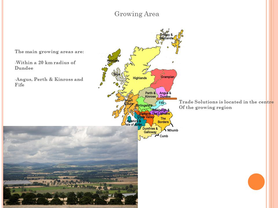 Growing Area The main growing areas are: - Within a 20 km radius of Dundee - Angus, Perth & Kinross and Fife Trade Solutions is located in the centre Of the growing region