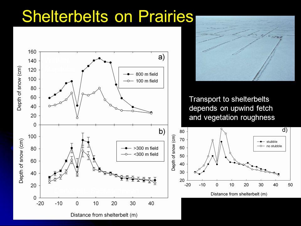 Shelterbelts on Prairies Winkler, Manitoba Conquest, Saskatchewan Transport to shelterbelts depends on upwind fetch and vegetation roughness