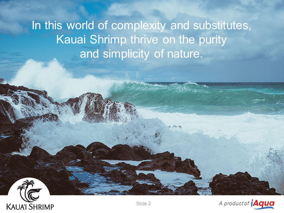 Clams are grown together with Kauai Shrimp to consume excess algae and produce another delicious seafood.