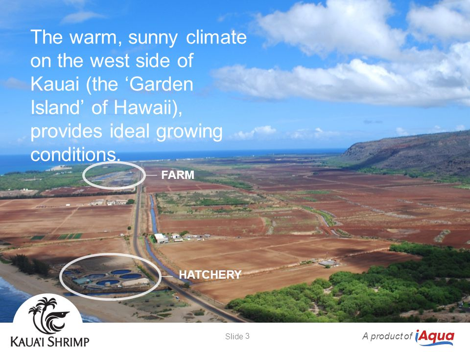 The warm, sunny climate on the west side of Kauai (the 'Garden Island' of Hawaii), provides ideal growing conditions. FARM HATCHERY A product of 3 Sli