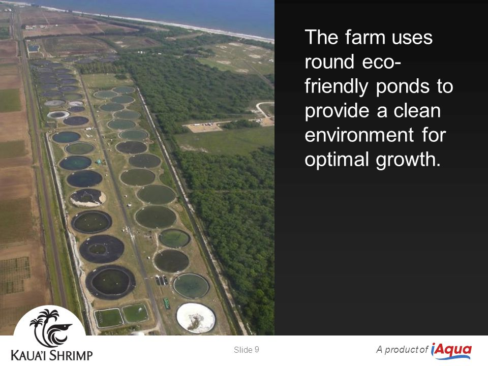 The farm uses round eco- friendly ponds to provide a clean environment for optimal growth. A product of 9 Slide