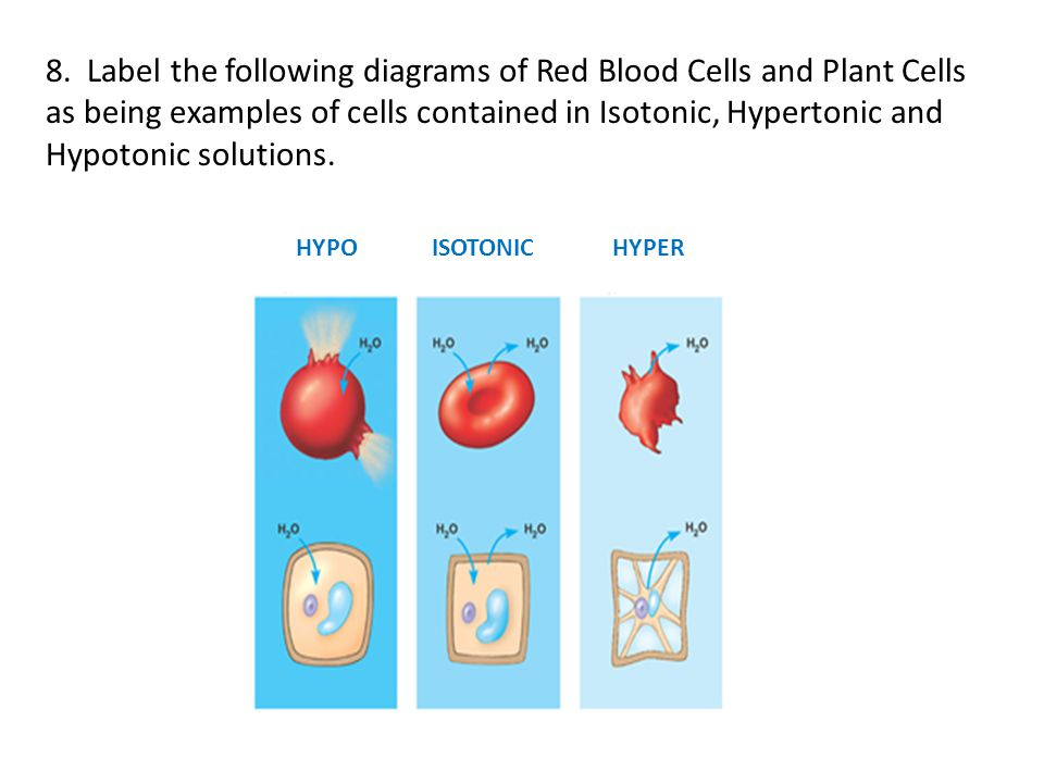 8. Label the following diagrams of Red Blood Cells and Plant Cells as being examples of cells contained in Isotonic, Hypertonic and Hypotonic solution