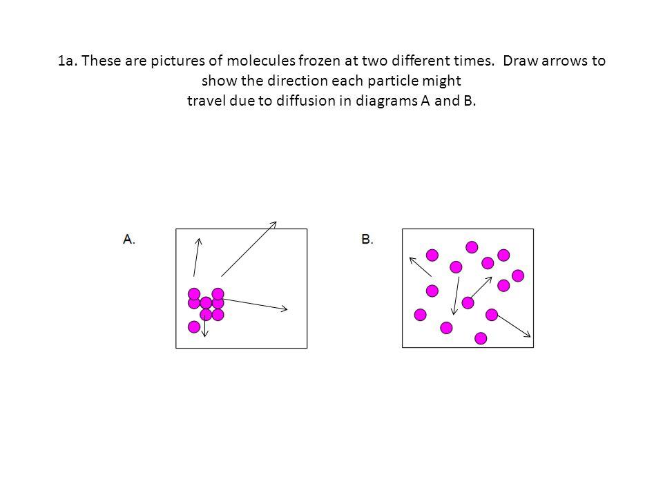 1b.Describe the way the particles of a gas move. Randomly.