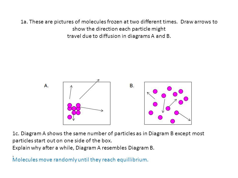 Worksheets Facilitated Diffusion Worksheet Answers diffusion worksheets student worksheet