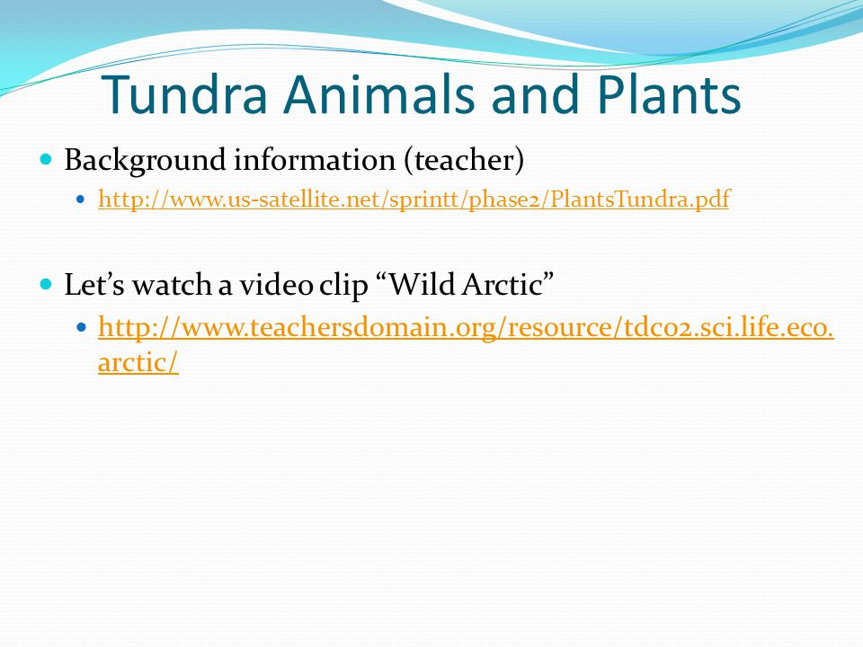 "Tundra Animals and Plants Background information (teacher) http://www.us-satellite.net/sprintt/phase2/PlantsTundra.pdf Let's watch a video clip ""Wild"