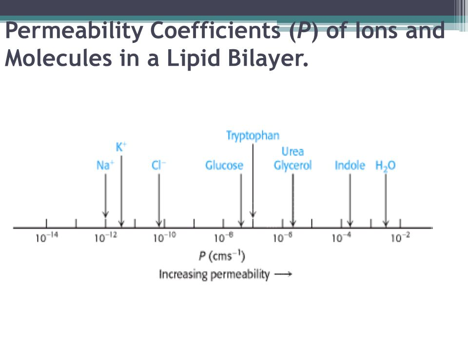 Permeability Coefficients (P) of Ions and Molecules in a Lipid Bilayer.