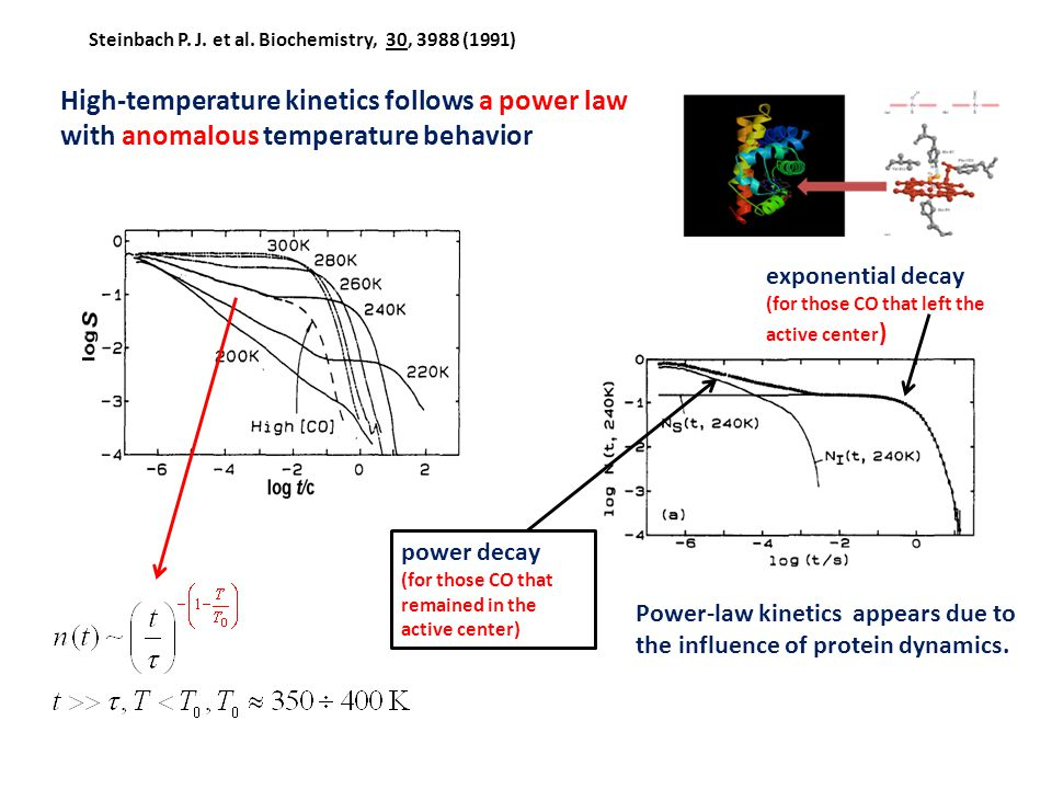 High-temperature kinetics follows a power law with anomalous temperature behavior power decay (for those CO that remained in the active center) expone