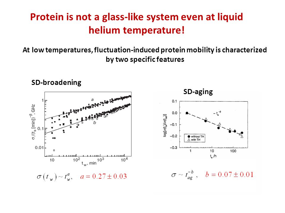 At low temperatures, fluctuation-induced protein mobility is characterized by two specific features SD-broadening SD-aging Protein is not a glass-like