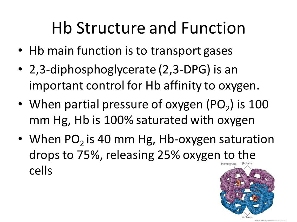Hb Structure and Function Hb main function is to transport gases 2,3-diphosphoglycerate (2,3-DPG) is an important control for Hb affinity to oxygen.