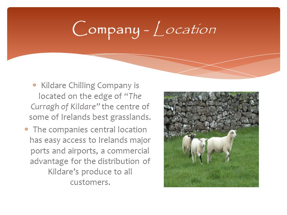  Kildare Chilling Company is located on the edge of The Curragh of Kildare the centre of some of Irelands best grasslands.